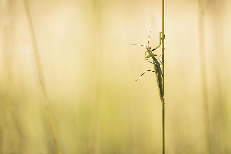 Award2013_Insectes