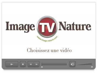 Image & Nature TV